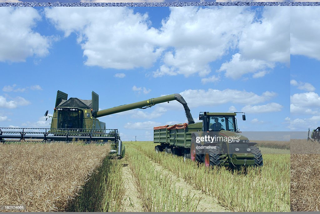 Harvest - combine and tractor at canola field : Stock Photo