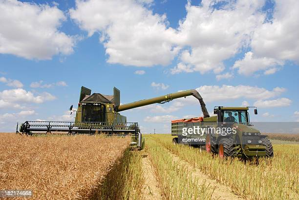 harvest - combine and tractor at canola field - threshing stock photos and pictures