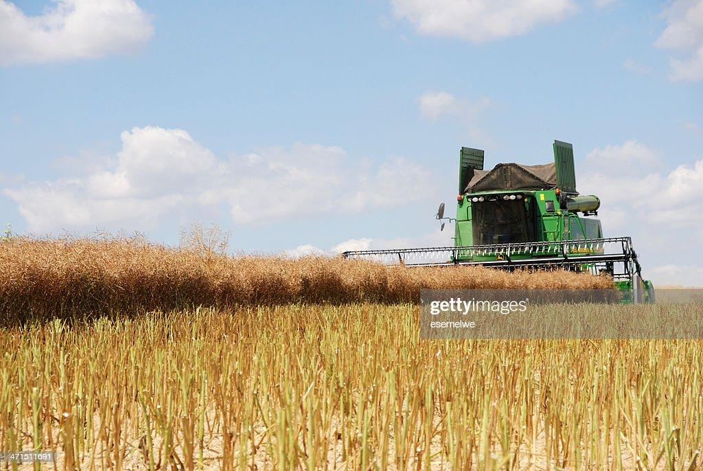 Harvest - combine at canola field : Stock Photo