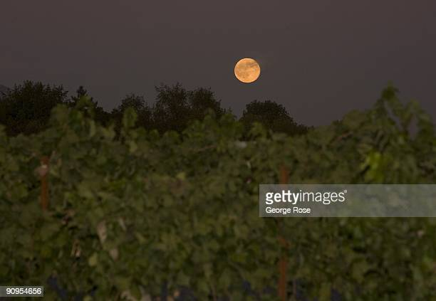 A harvest full moon rises in the sky over vineyards near Lambert Bridge Winery during a Sonoma Wine Country Weekend Showase of Wine Food Festival as...