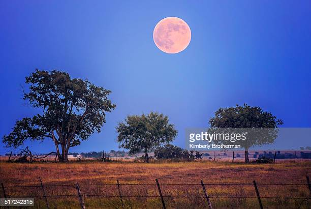 Harvest Moon over field with 3 trees