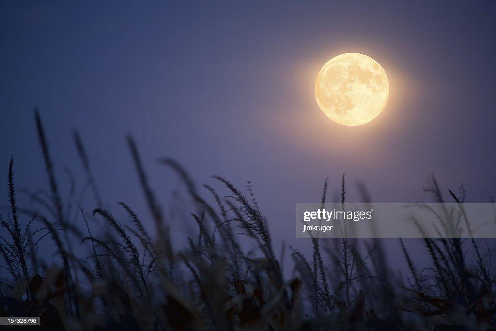Harvest Moon. : Stockfoto