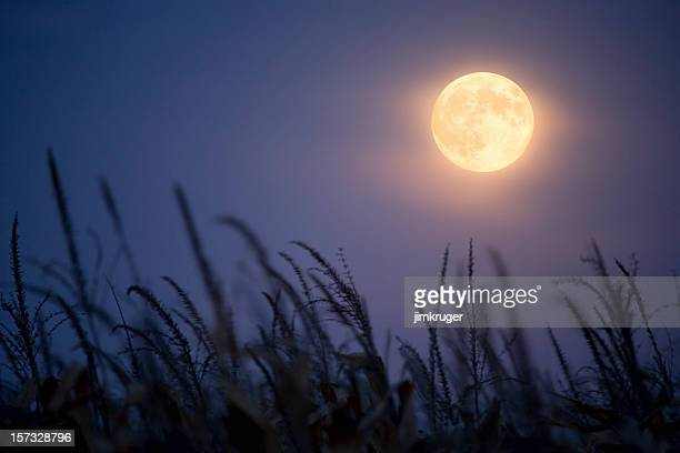 lune des moissons. - pleine lune photos et images de collection