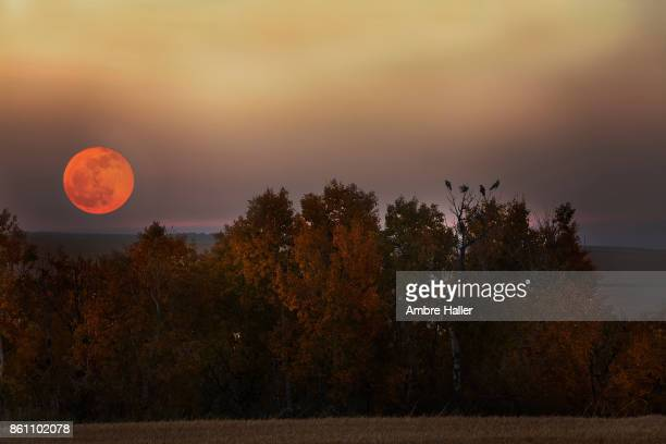 Harvest Moon rising over Autumn trees with birds perched on them