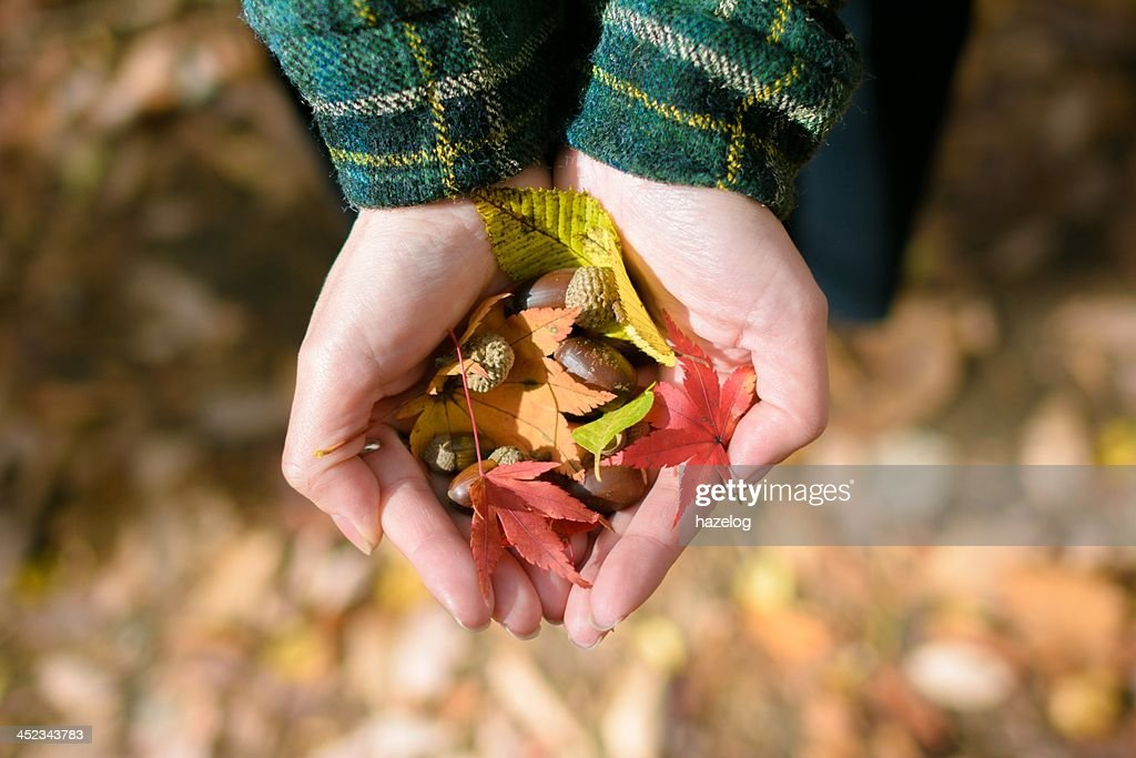 Harvest of autumn in a woman's hand : Stock Photo