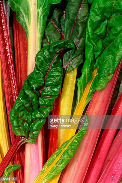 A harvest of 'Bright Lights' variety of the highly nutritious swiss chard.