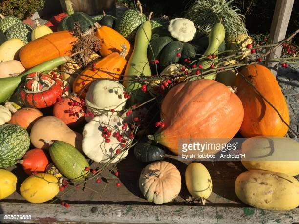 Harvest of colorful pumpkins for a Halloween party in autumn