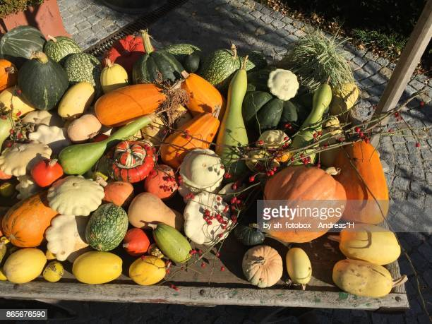 harvest of colorful pumpkins for a halloween party in autumn - health food shop stock pictures, royalty-free photos & images