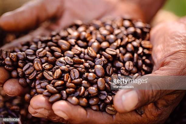 Harvest Café bio fraîchement torréfié