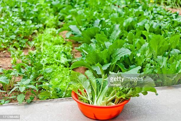 ハーヴェストの野菜と庭園