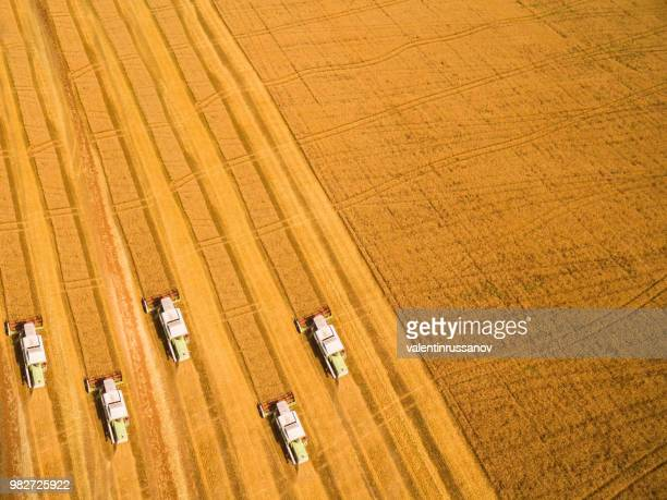 Harvest of wheat field