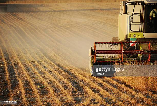 harvest - soybean harvest stock pictures, royalty-free photos & images