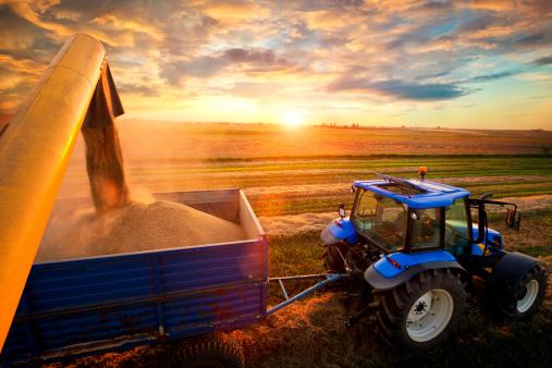 Harvest 164458970