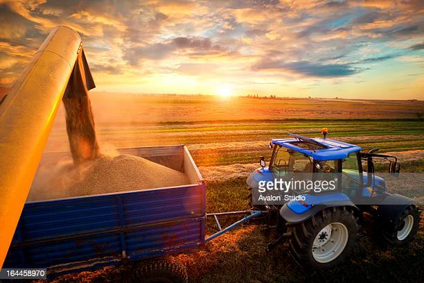 harvest - tractor stock pictures, royalty-free photos & images