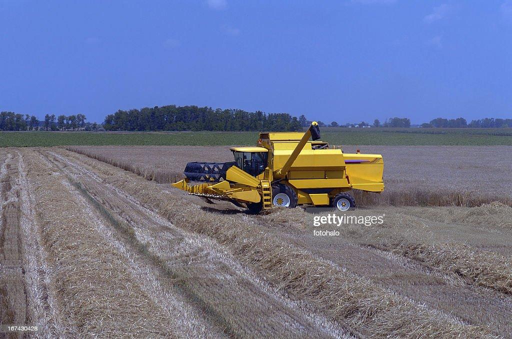 harvest : Stock Photo