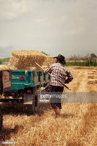 harvest - threshing stock photos and pictures