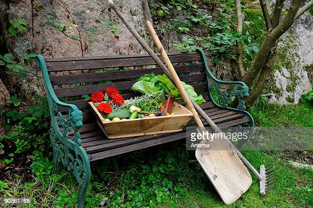 harvest - september stock pictures, royalty-free photos & images
