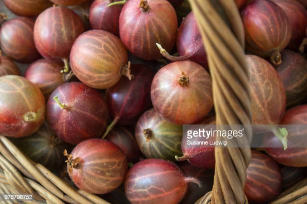 harvest - susanne ludwig stock pictures, royalty-free photos & images