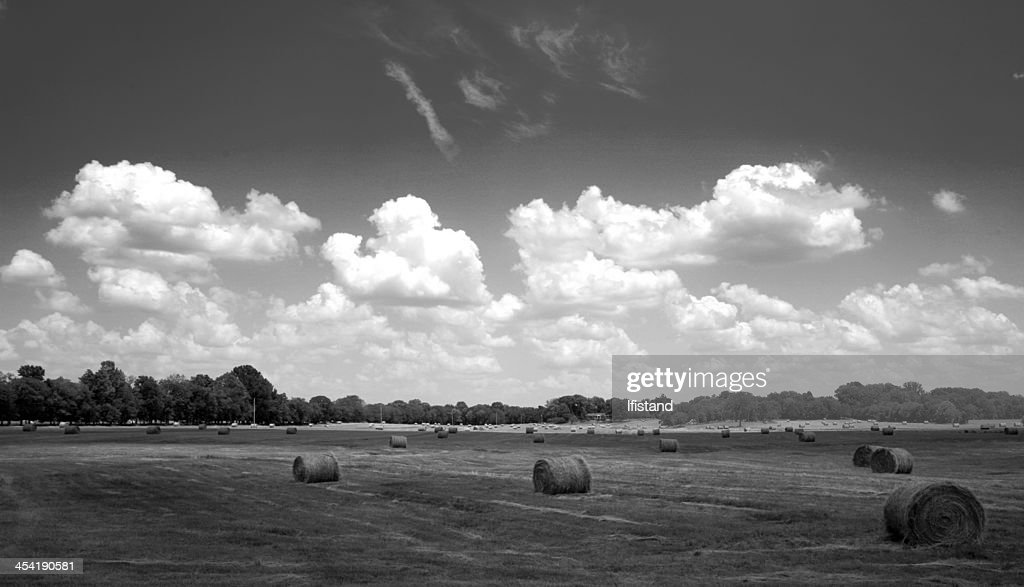 Harvest time : Stock Photo