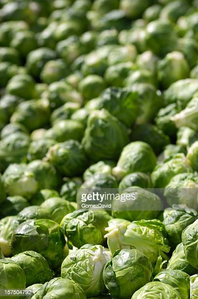 Harvested Brussels Sprouts in Shipping Crate