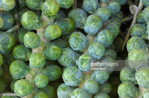 Harvested Brussels Sprouts Stalk