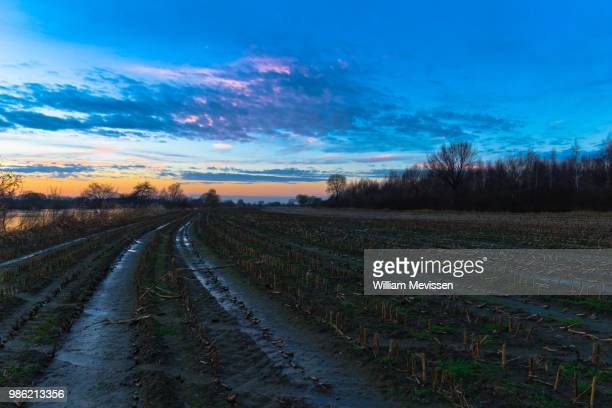 harvested cornfield - william mevissen stockfoto's en -beelden