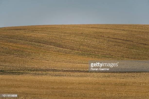 A harvested field is pictured in front of a cloudless sky on August 01 2018 in Diehsa Germany Farmers complain harvest losses because of the dry...