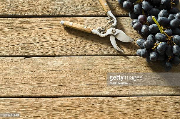 Harvested grapes with tool on wood surface