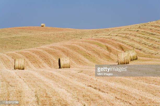 harvested hay bales in field - san quirico d'orcia stock pictures, royalty-free photos & images