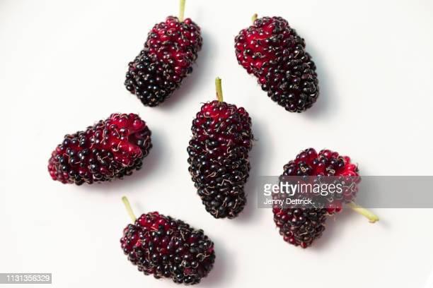 harvested mulberries - マルベリー ストックフォトと画像