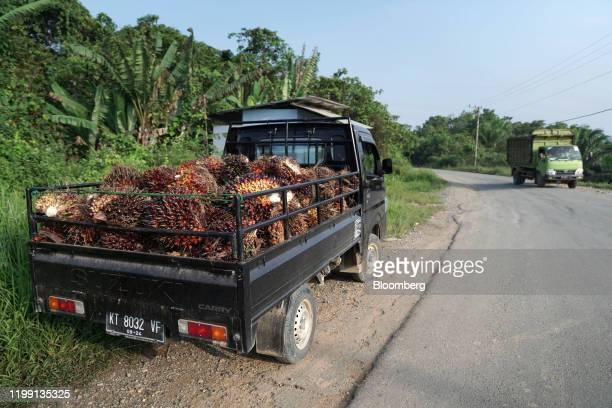 Harvested palm oil fruit bunches sit in the back of a truck on the side of a road in East Kalimantan, Borneo, Indonesia, on Wednesday, Nov. 27, 2019....