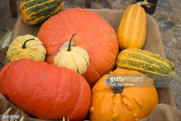 harvested pumpkins stacked