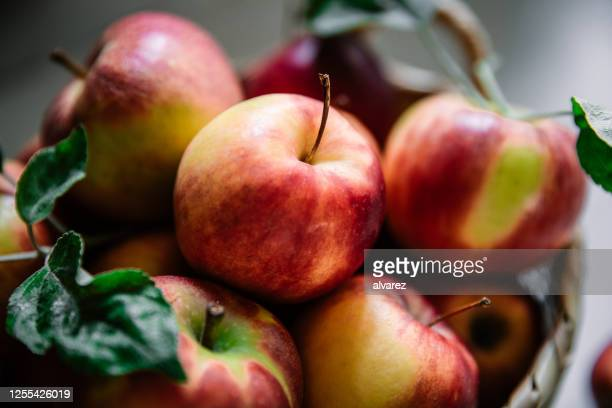 harvested red apples in a basket - harvesting stock pictures, royalty-free photos & images