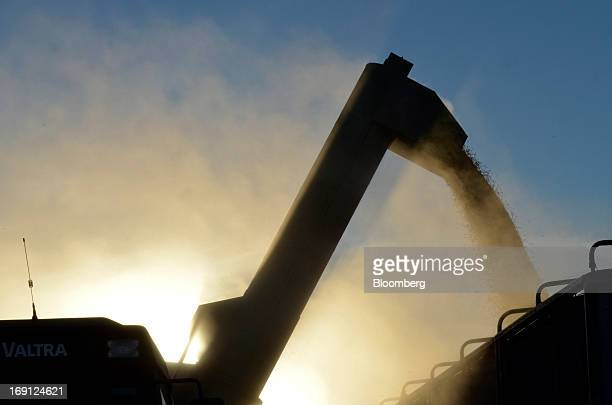 Harvested soybeans are loaded into a bin on a farm near Salto Argentina on Friday May 17 2013 Argentina the world's thirdbiggest soybean shipper...