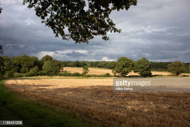 Harvested wheat field under darkening skies at in Baddesley Clinton England United Kingdom Golden colour these ripe heads of grain which is also...
