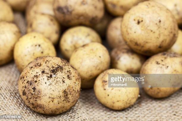 harvested young fresh organic potatoes with soil - rauwe aardappel stockfoto's en -beelden