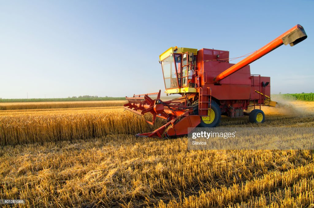 Harvester combine harvesting wheat on agricultural field : Stock Photo