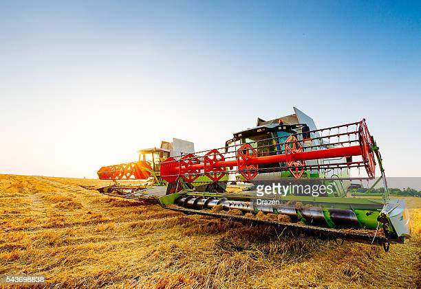 Harvester combine on wheat harvesting in summer