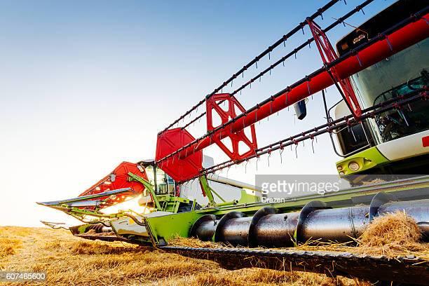Harvester combine on wheat harvesting in summer