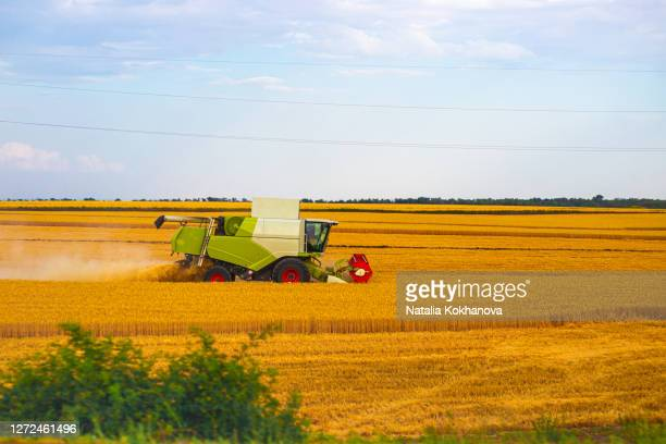 harvester harvests ripe wheat field agriculture