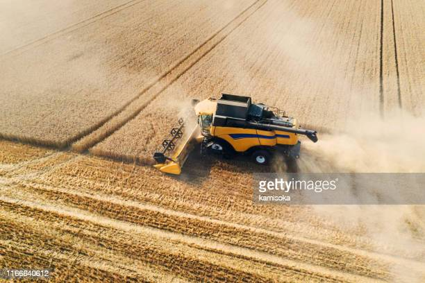 harvester harvests wheat on a field - aerial view - agricultural machinery stock pictures, royalty-free photos & images