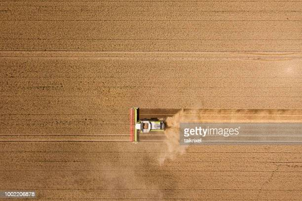Harvester harvests wheat on a field, Thuringia, Germany