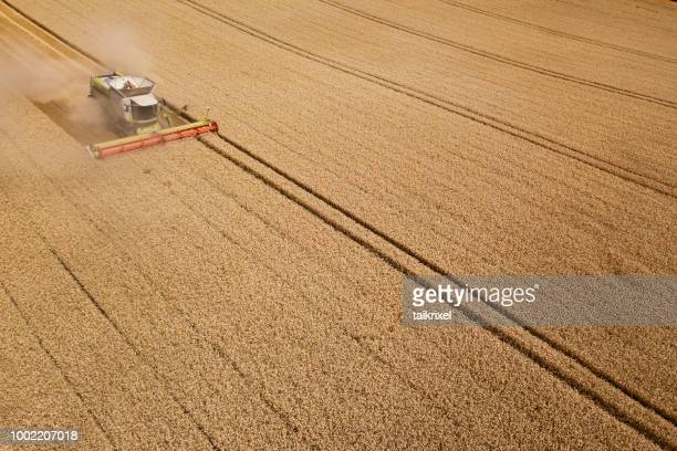 harvester harvests wheat on a field, thuringia, germany - campo foto e immagini stock