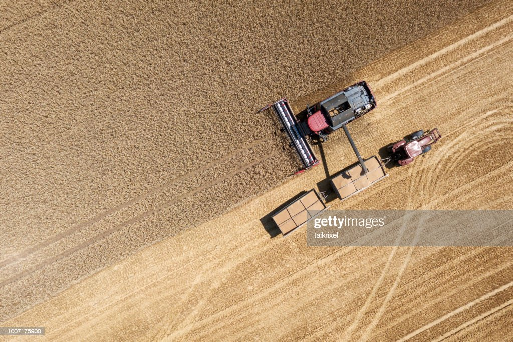 Harvester harvests wheat on a field, Thuringia, Germany : Stock Photo