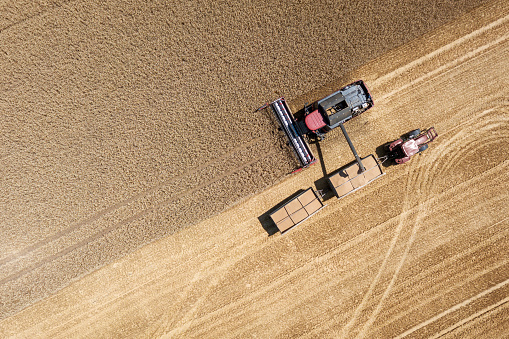 Harvester harvests wheat on a field, Thuringia, Germany 1007175900