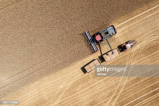 harvester harvests wheat on a field, thuringia, germany - wheat stock pictures, royalty-free photos & images