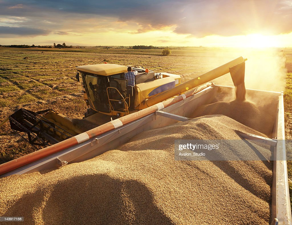 Harvester : Stock Photo