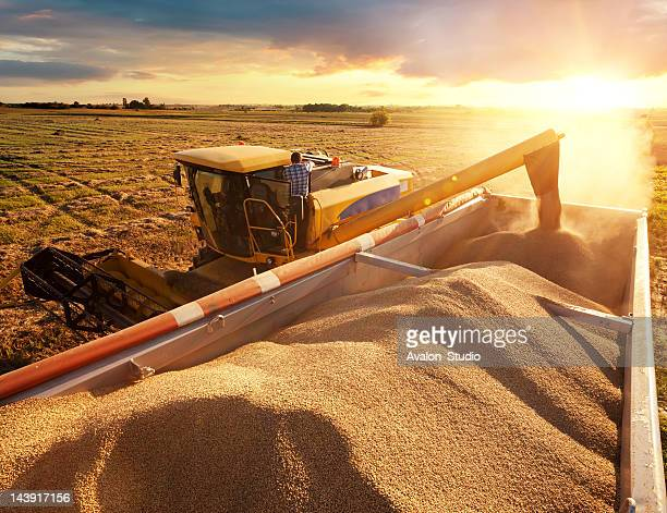 harvester - cereal plant stock pictures, royalty-free photos & images