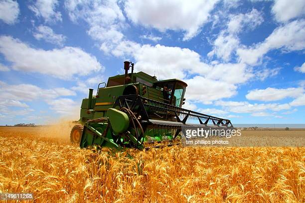 Harvester reaping grain