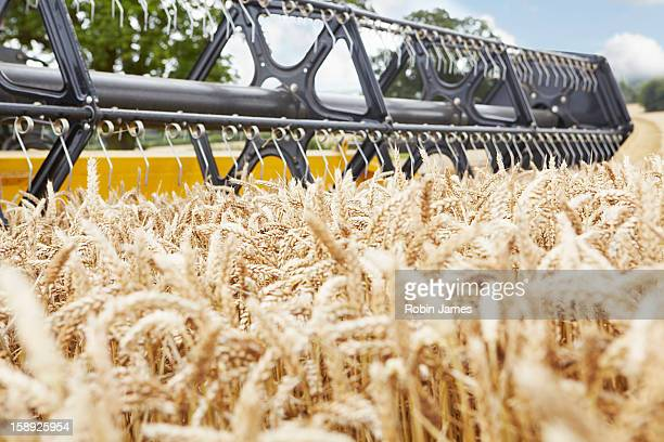harvester working in crop field - combine harvester stock pictures, royalty-free photos & images